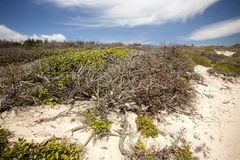Coastal vegetation Amoronia orange bay, north of Madagascar Royalty Free Stock Photos