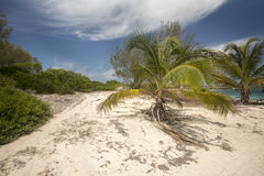 Coastal vegetation Amoronia orange bay, north of Madagascar Stock Photos