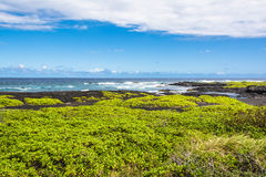 Coastal vegetation on Black Sand Beach, Hawaii Royalty Free Stock Image