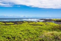 Coastal vegetation on Black Sand Beach, Hawaii. A view of the coast of Black Sand Beach covered with vegetation Royalty Free Stock Image