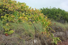 Coastal vegetation in Florida Keys Stock Photo
