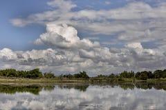 Coastal vegetation north eastern Madagascar Royalty Free Stock Photo