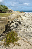 Coastal vegetation on rocky headland Stock Photo