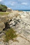 Coastal vegetation on rocky headland stock photo