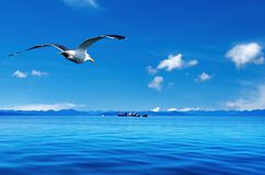 Coastal view. Blue sky, ocean and flaying seagull Stock Photo