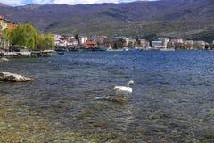 Coastal view of Ohrid, Macedonia. Ohrid, Macedonia - April 8, 2017: Coastal view of Ohrid, a small city by the Lake Ohrid in southwest of FYR Macedonia. Swans on Royalty Free Stock Photos