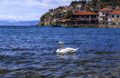 Coastal view of Ohrid, Macedonia. Coastal view of Ohrid, a small city by the Lake Ohrid in southwest of FYR Macedonia. Swans on the lake Stock Image