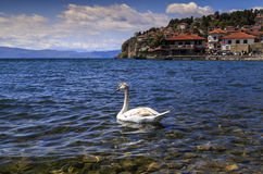 Coastal view of Ohrid, Macedonia. Coastal view of Ohrid, a small city by the Lake Ohrid in southwest of FYR Macedonia. Swans on the lake Royalty Free Stock Photo