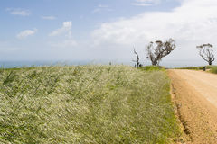 Coastal View,Unsealed Dirt Road, Dead Tree, Fleurieu Peninsula Royalty Free Stock Photos