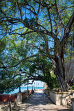 Coastal walkway under a tree Stock Photos