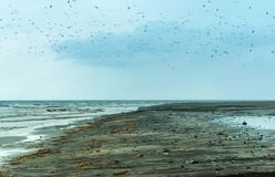 Coastal water pollution, birds in polluted areas. Birds in polluted areas, coastal water pollution royalty free stock photography