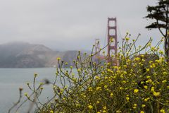 Coastal Wildflowers by the Golden Gate Stock Photo