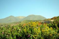 Coastal wildflowers Stock Image