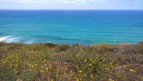 Coastal Wildflowers Stock Photos