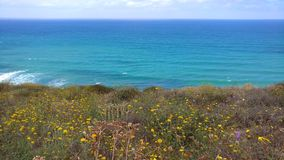 Coastal Wildflowers. Torrey Pines State Natural Reserve Stock Photos
