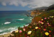 coastel λουλούδια στοκ εικόνες