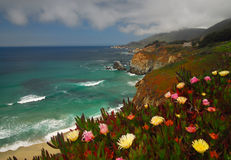 Coastel Flowers. Along the Pacific ocean in California Stock Images