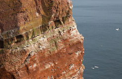 Coastine of the island Helgoland Stock Images