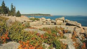 Coastline, Acadia Stock Image