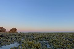 Algae during low tide at Point Lonsdale, Australia stock photo