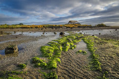 Coastline at Ambury Farm Royalty Free Stock Photo