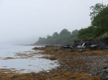 Coastline At Low Tide Stock Photography