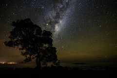 Kaikoura Milky way. Coastline with beautiful milky way in the background with a tree stock images