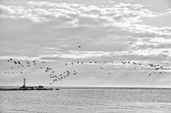 Coastline with birds. Black and White image with birds flying and lighthouse with some sun trails in background Royalty Free Stock Images