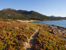 Coastline at Bodri, Corsica, on a summer evening. Coastline with macchia at Bodri, Corsica, on a summer evening stock images