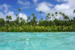 Coastline with coconut trees and turquoise water Stock Image