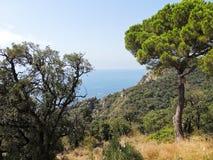 Coastline Costa Brava, Spain Stock Image