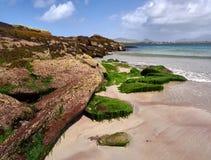 Coastline in Dingle, Ireland. Green algae grow on the rocks at Wine Strand, Dingle, Ireland. The blue sea is cristal clear Stock Images
