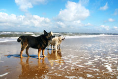 Coastline dogs Royalty Free Stock Photos