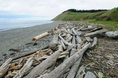 Coastline in ebey's landing Royalty Free Stock Image