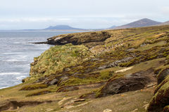 Coastline Falkland Islands Royalty Free Stock Photo