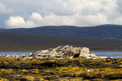 Coastline Falkland Islands Stock Photography