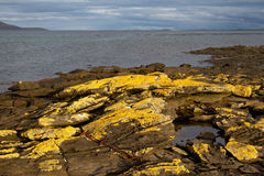 Coastline Falkland Islands Royalty Free Stock Photography