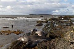 Coastline Falkland Islands Royalty Free Stock Photos
