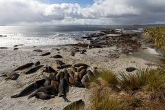 Coastline Falkland Islands Royalty Free Stock Images