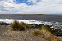 Coastline Falkland Islands Royalty Free Stock Photos