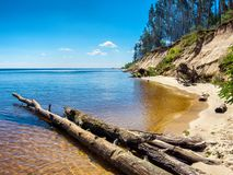 Coastline with floating wood and sand cliff with pines Stock Photos