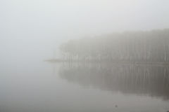 Coastline. The coastline and the forest in the fog stock photography