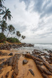 Coastline in Galle, Sri Lanka. Palm trees line coast in Galle, Sri Lanka on sunny day Royalty Free Stock Photo
