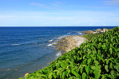 Coastline,Green Island,Taiwan Royalty Free Stock Image