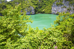 coastline of a green lagoon and tree  south china Royalty Free Stock Photography