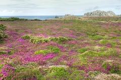Coastline heath Stock Photo