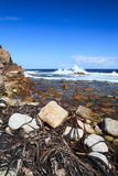 Coastline and high wave at Cape of Good Hope, South A Royalty Free Stock Image