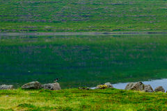 Coastline and landscape along the Isafjordur fjord Royalty Free Stock Photography