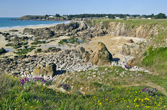 Coastline landscape of South of Yeu Island. Rocky Coastline of South of Yeu Island with spring flowers and green plants at foreground and sandy beach and lonely Stock Images