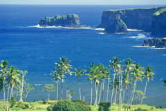 Coastline with Palm Trees, Maui, Hawaii Stock Image